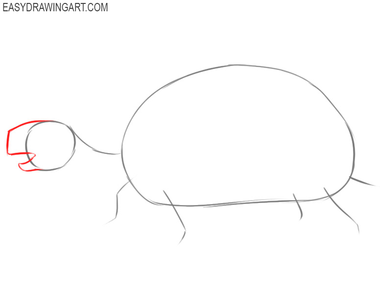 how to draw a tortoise step by step easy
