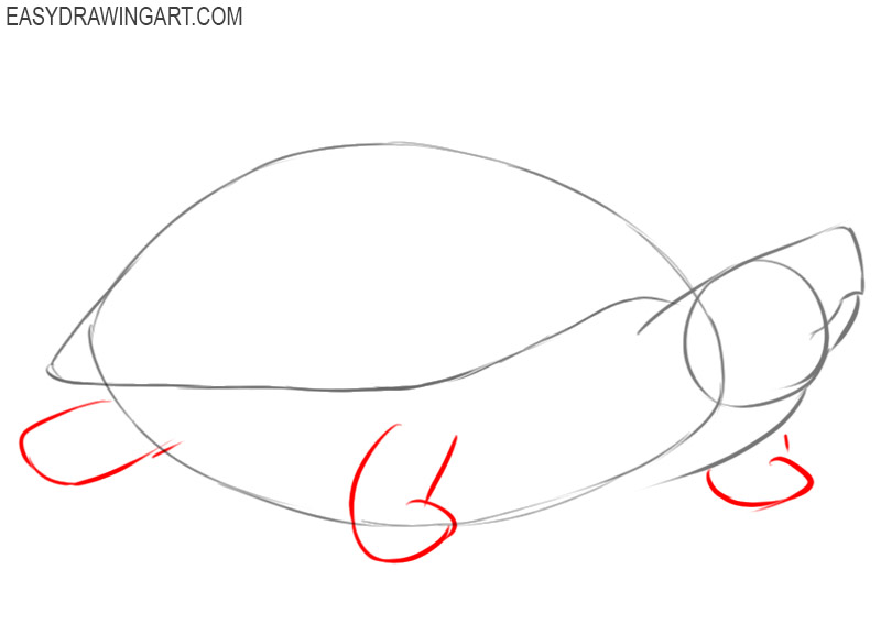 how to draw a turtle by step