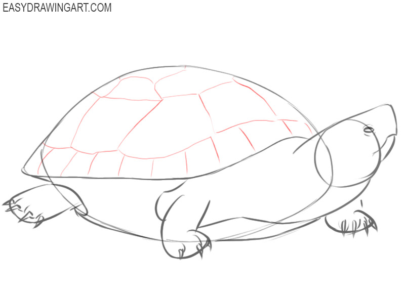 how to draw a turtle colour