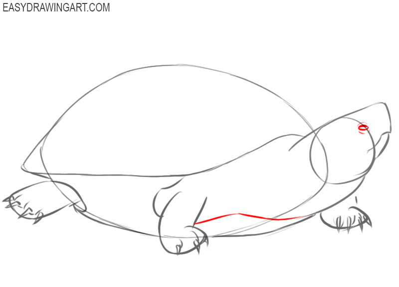 how to draw a turtle cute and easy