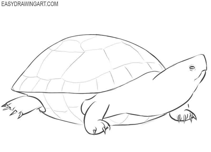 how to draw a turtle draw so cute