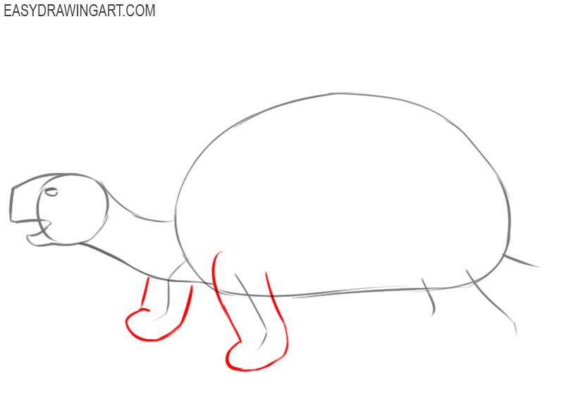 how to draw an easy tortoise