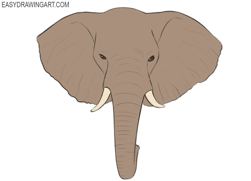 How To Draw An Elephant Head Easy Drawing Art