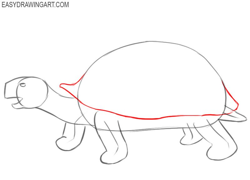 how to draw and colour tortoise