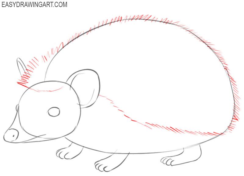 how to draw basic hedgehog