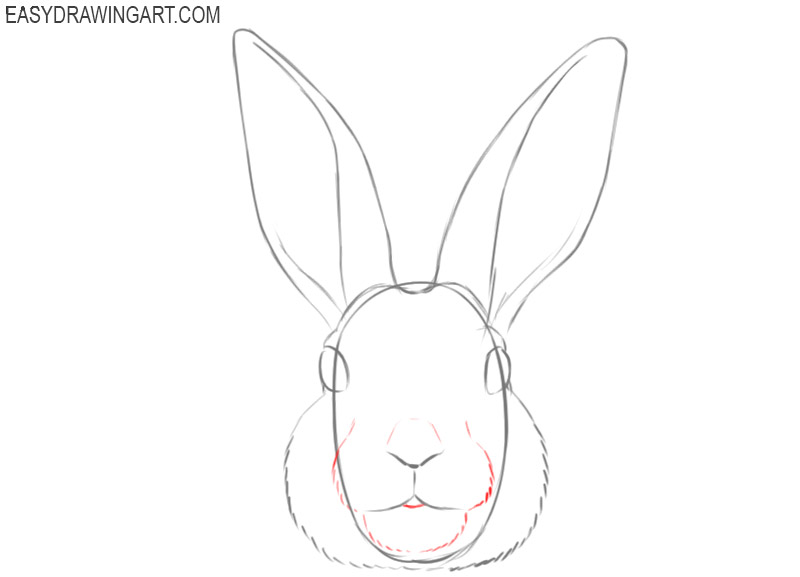 how to draw bunny rabbits face
