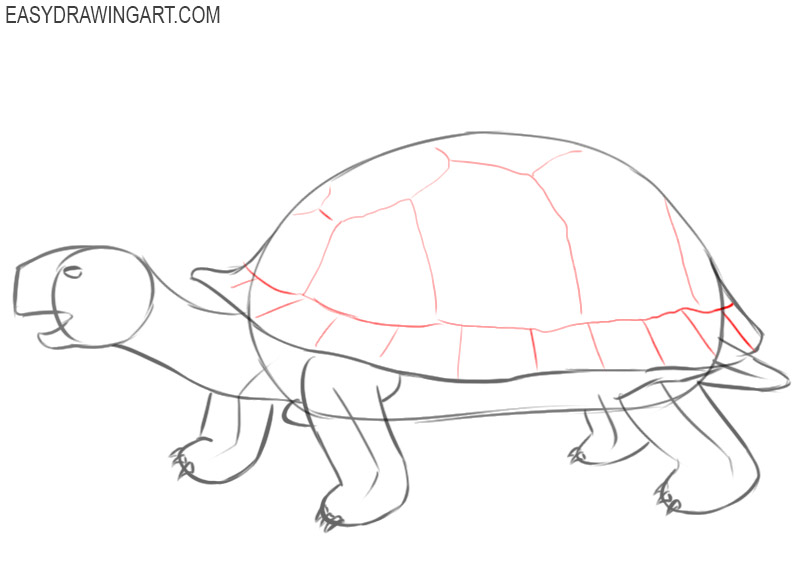 how to draw pictures of tortois