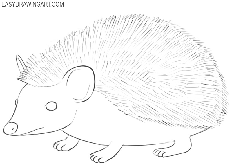 how to draw the perfect hedgehog