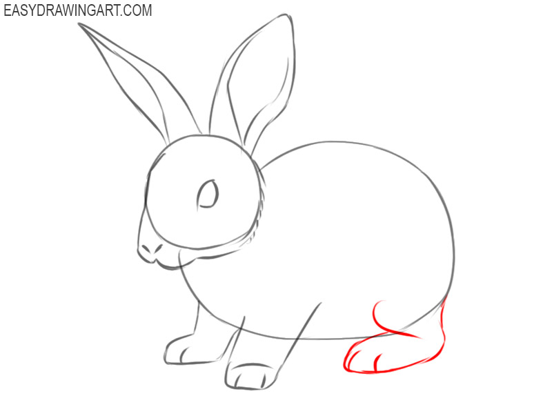 instructions of how to draw a rabbit