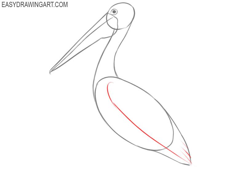 pelican drawing cartoon