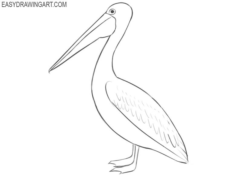 pelican drawing color