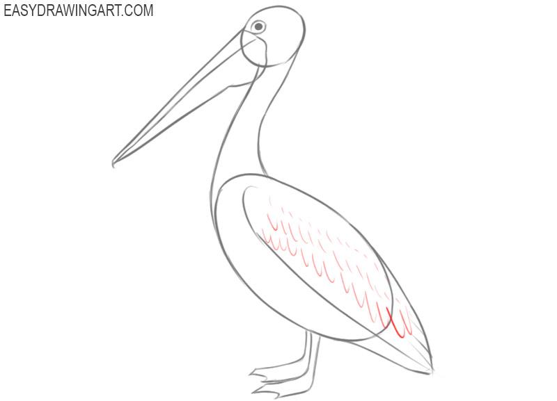 pelican drawing easy