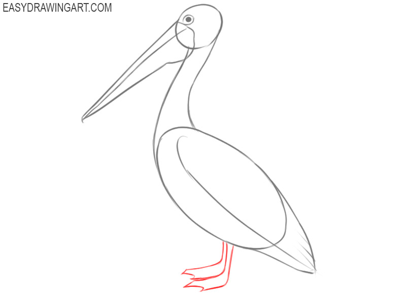 pelican drawing step by step