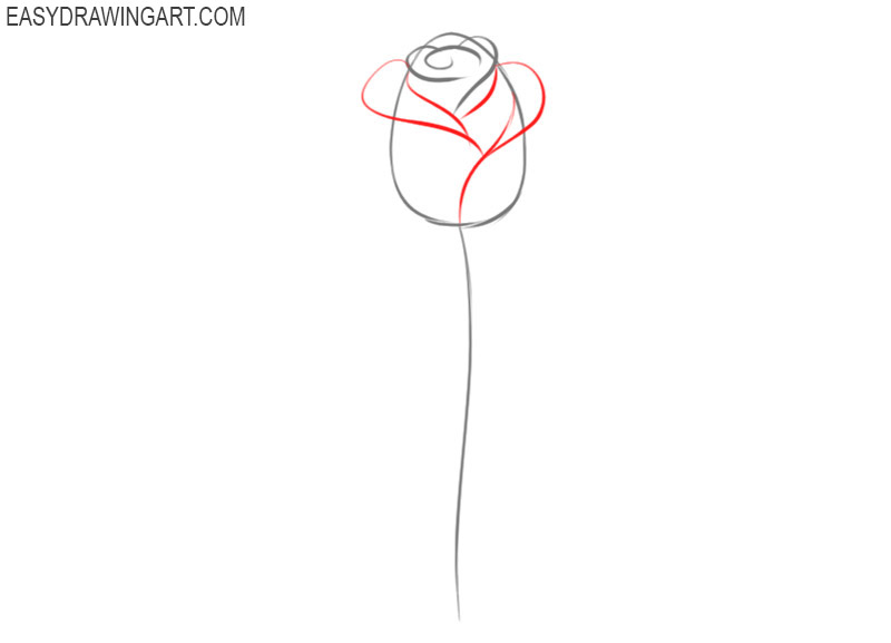 pics of how to draw a rose