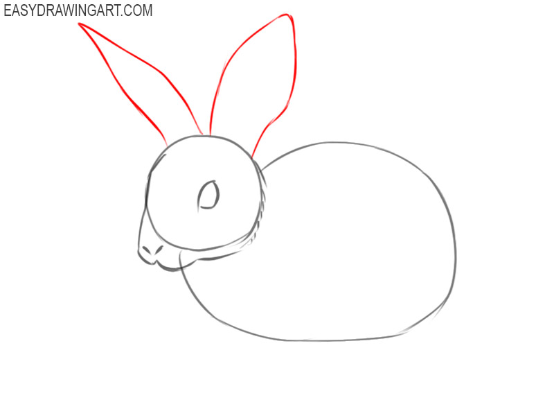 pictures of how to draw a rabbit