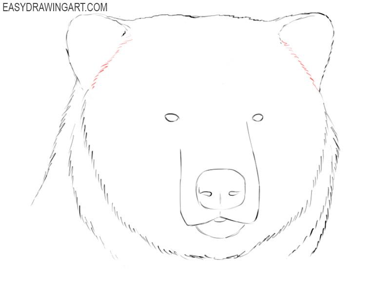 realistic bear head drawing