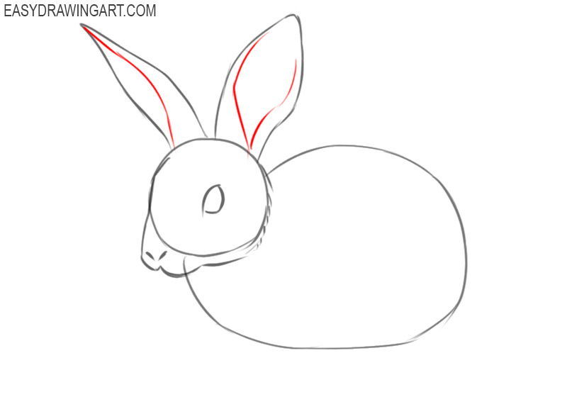 steps of how to draw a rabbit