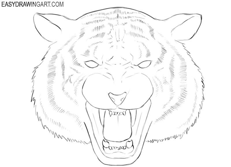 tiger head simple drawing tutorial