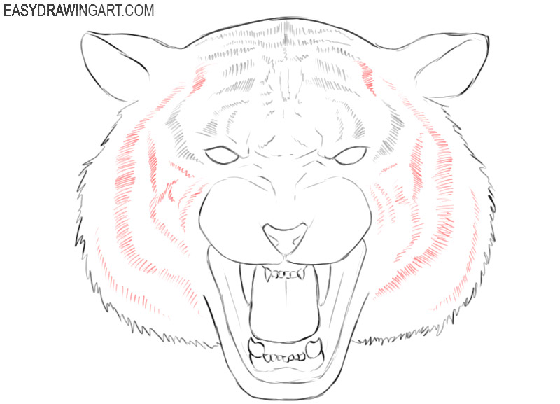 tiger head simple drawing
