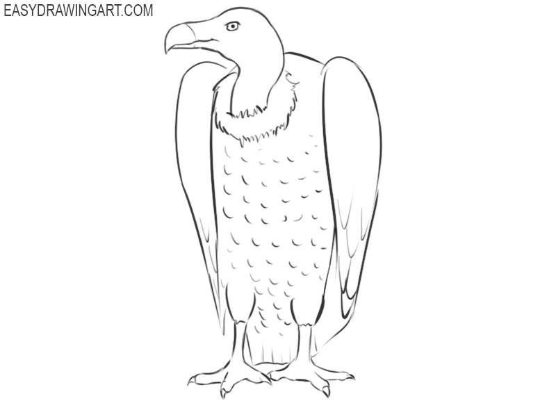 vulture drawing pictures