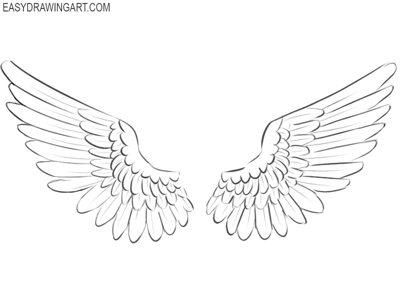 wings drawing basics