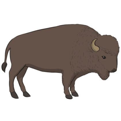 How to draw a buffalo