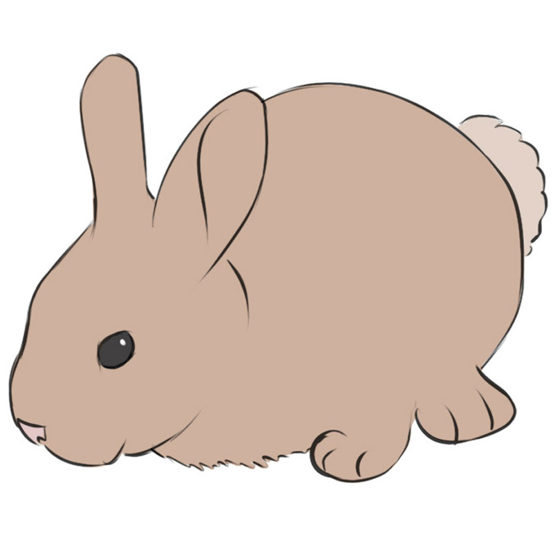 How To Draw A Bunny Easy Drawing Art
