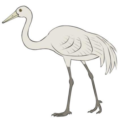 How to draw a crane bird