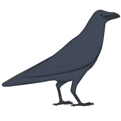How to draw a raven