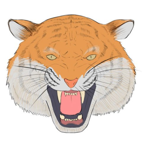 How to draw a tiger head