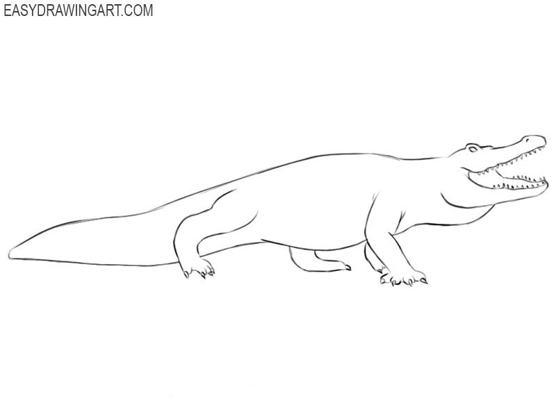 alligator drawing tutorial