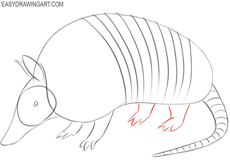 armadillo cartoon drawing