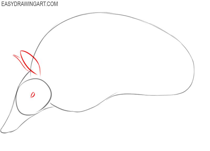 armadillo drawing cute