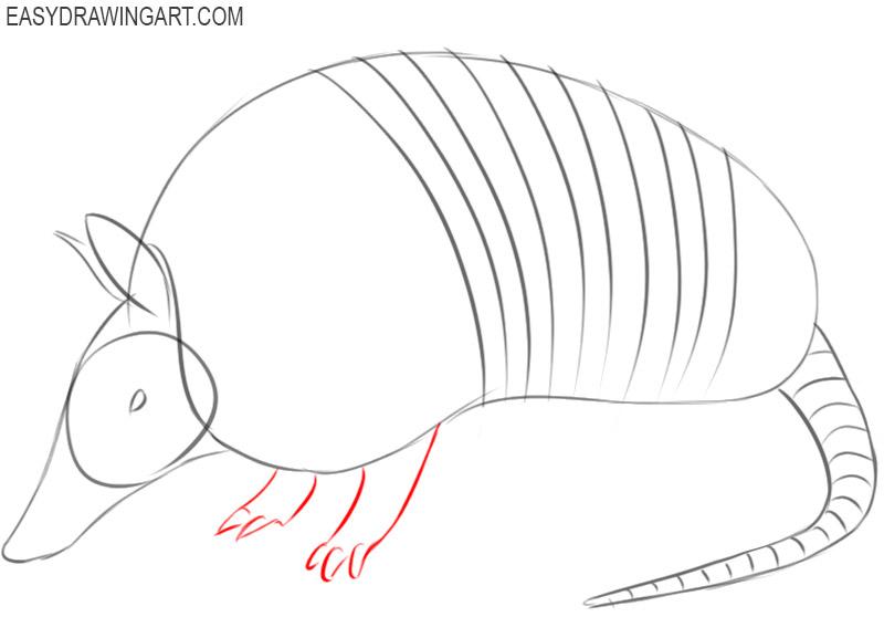 armadillo drawing easy