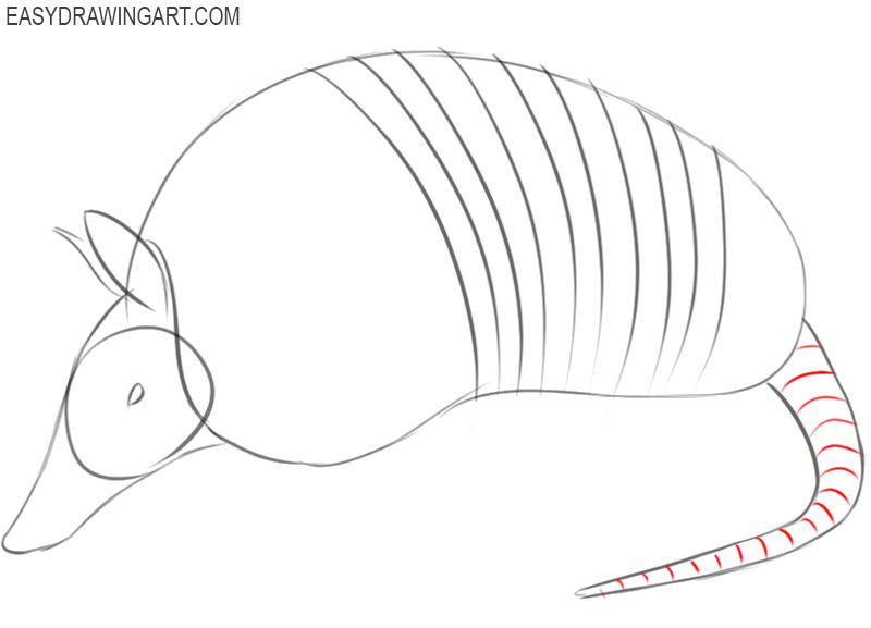 armadillo drawing image