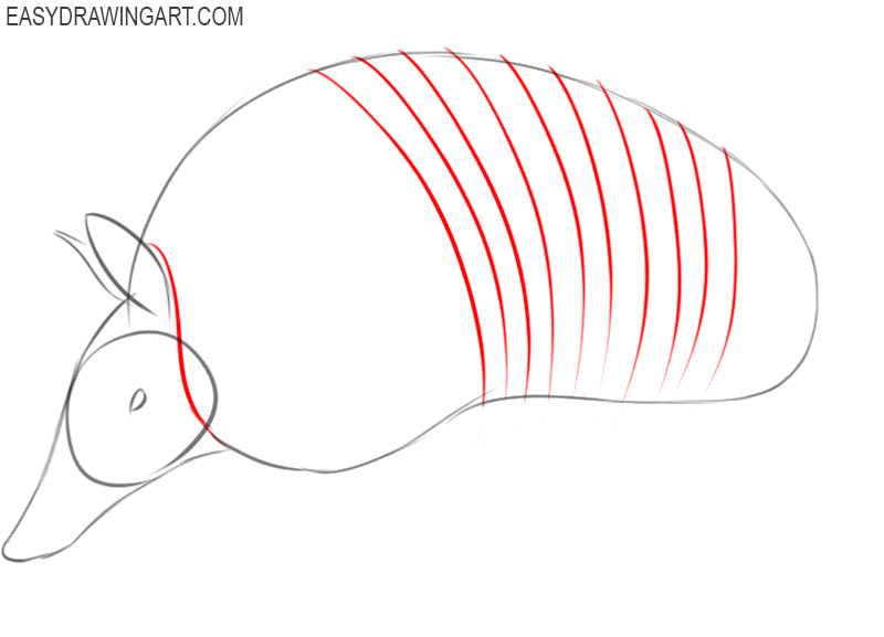 armadillo drawing step by step