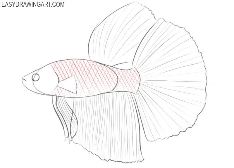betta fish cartoon drawing