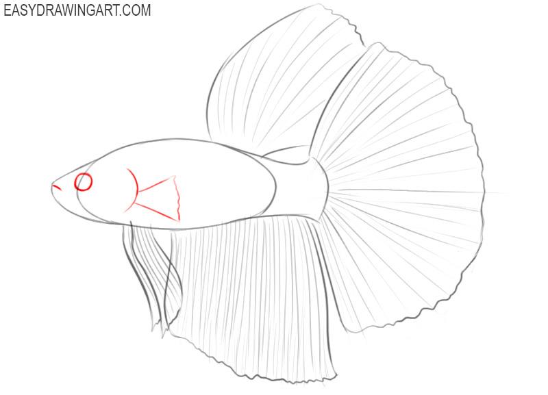 betta fish drawing tutorial