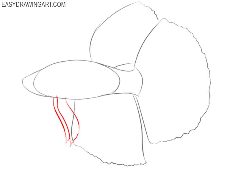 easy to draw betta fish