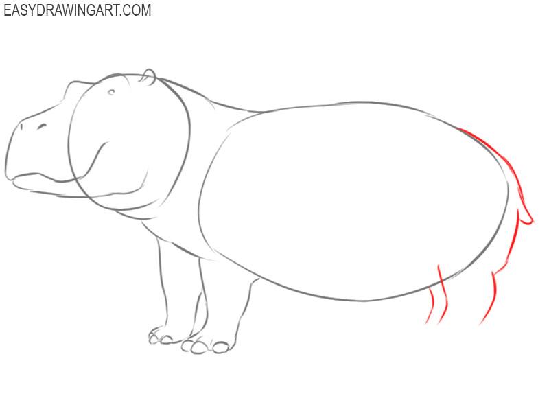 hippopotamus drawings to color