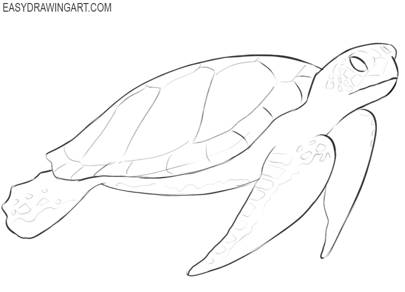 how to draw a cute and easy sea turtle