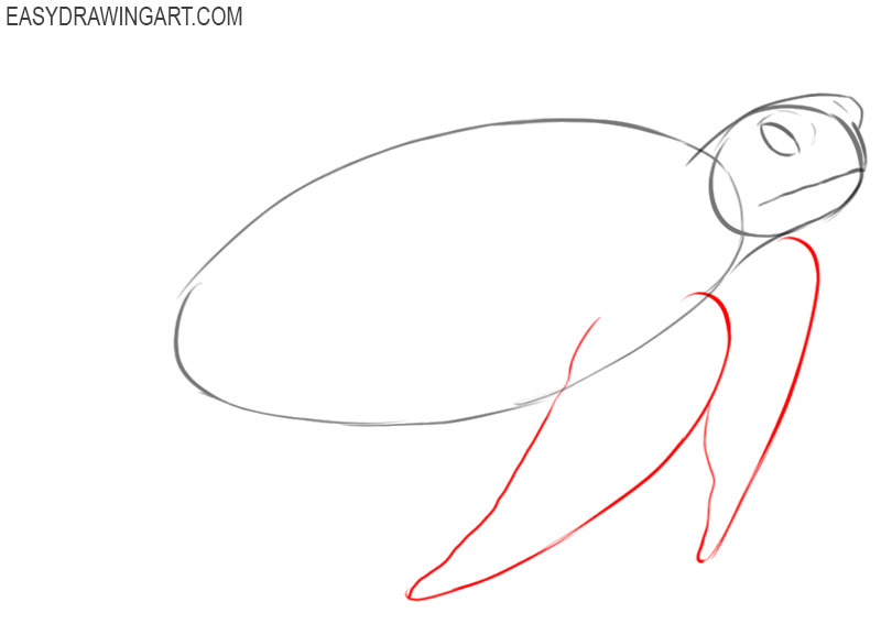 how to draw a sea turtle step by step