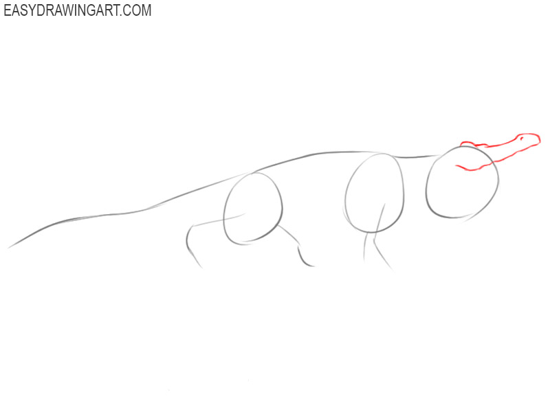 how to draw an alligator easy
