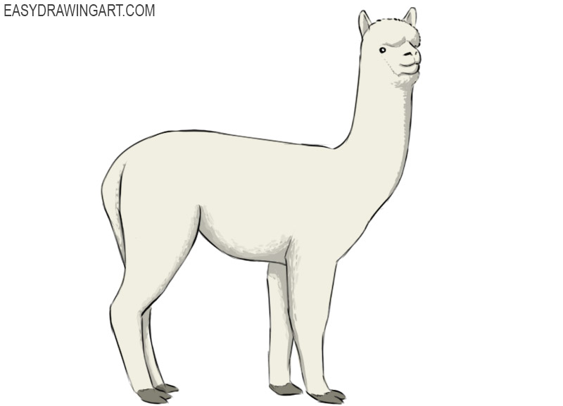 how to draw an alpaca