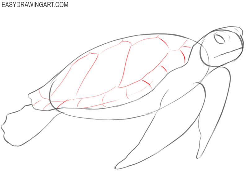 how to draw an easy sea turtle