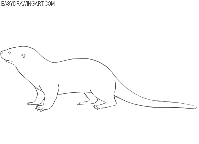 otter drawing easy