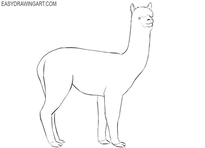 single alpaca drawing