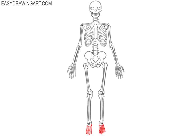 skeleton drawing anatomy