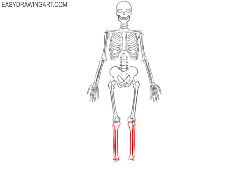 skeleton drawing simple