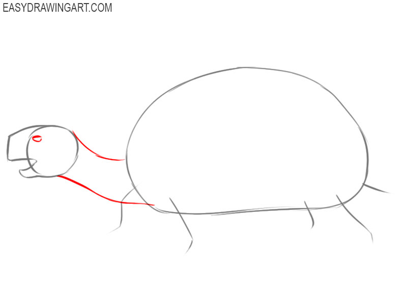 how to draw and colour a tortoise